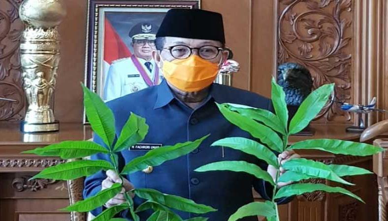 Gubernur Fachrori Umar saat perlihatkan daun Sungkai