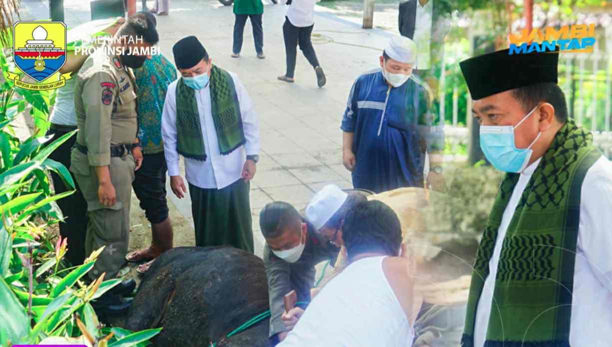 Al Haris saat memantau pemotongan Sapi kurban di Rumah Dinas Gubernur Jambi